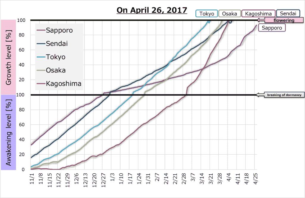 Graph of sakura blossom
