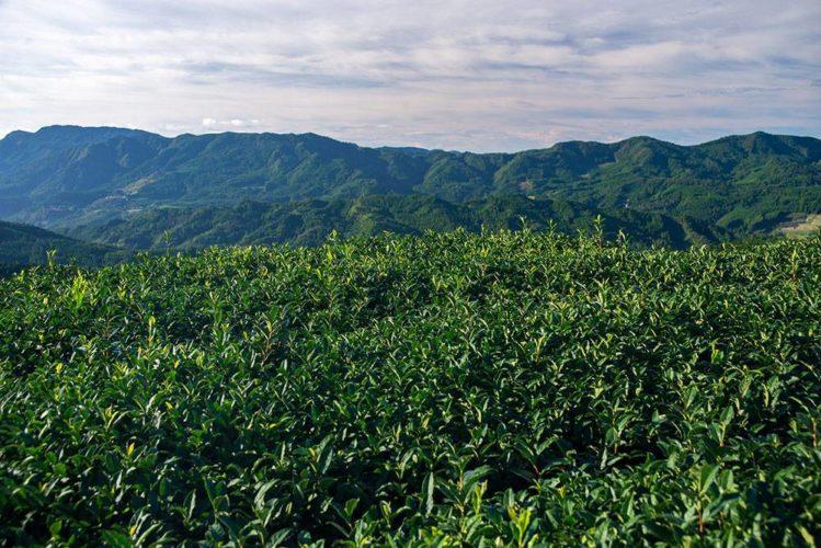 Green tea from Hoshi-no mura