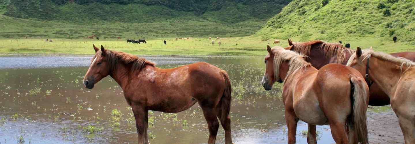 Horses roaming free in Kyushu