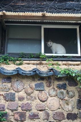 arita-cat