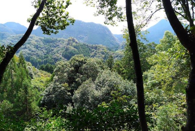 rakanji-forest