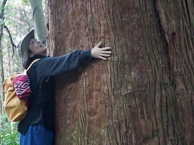 Huge-cedar-tree-sasaguri