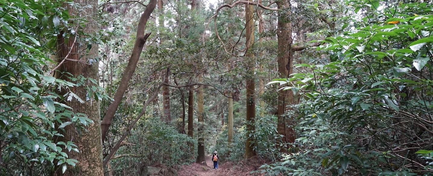 sasaguri-cedar-wood forest