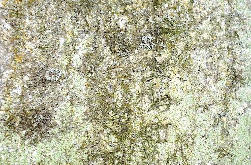takeo stone