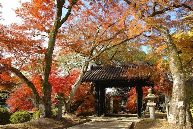 Akizuki Castle In Autumn