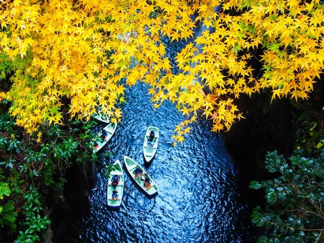 kyushu autumn leaves