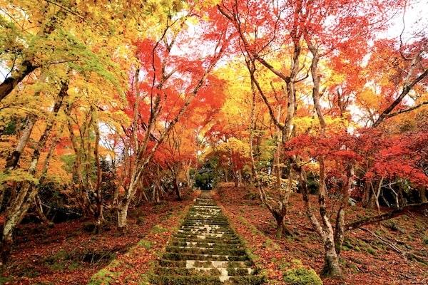 Japan Autumn Tour