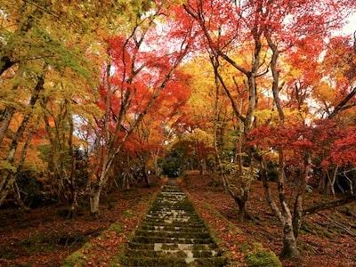 Kyushu Fall Leaves