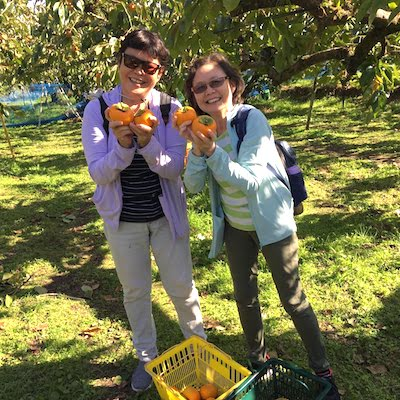 Persimmon picking
