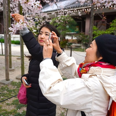Japanese temple and sakura