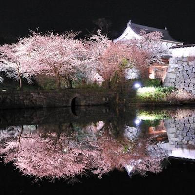 Sakura Japan castle
