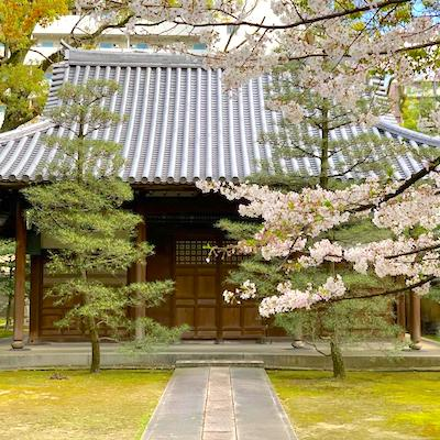 Sakura Japanese temple