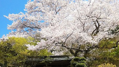 Japanese Temple Nature