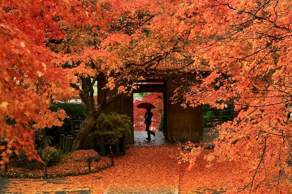 Kyushu Autumn Tour